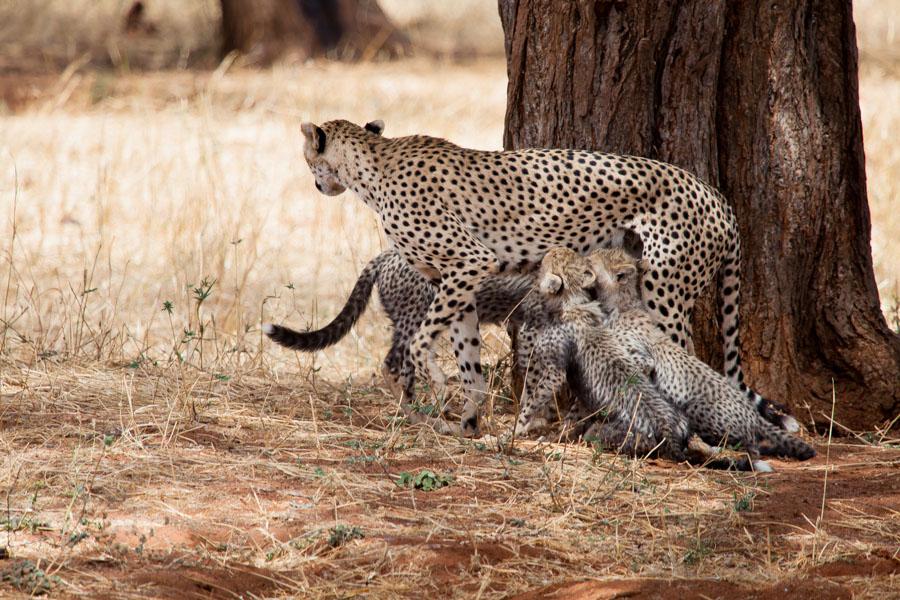 safarioct2013-16