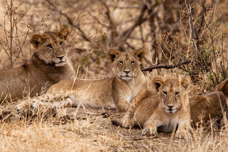 safarioct2013-2