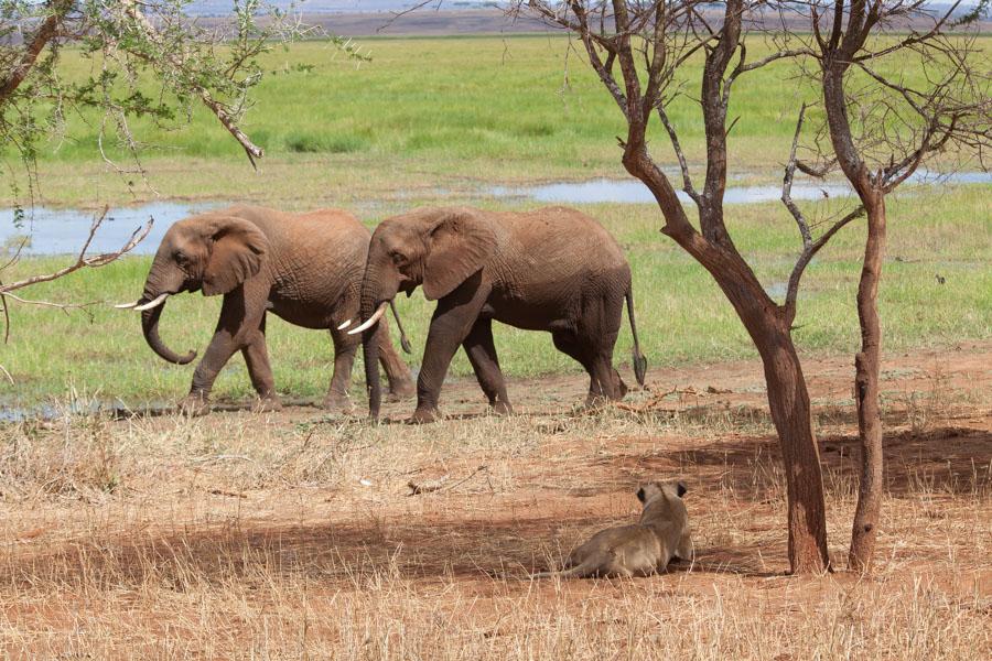 safarioct2013-20