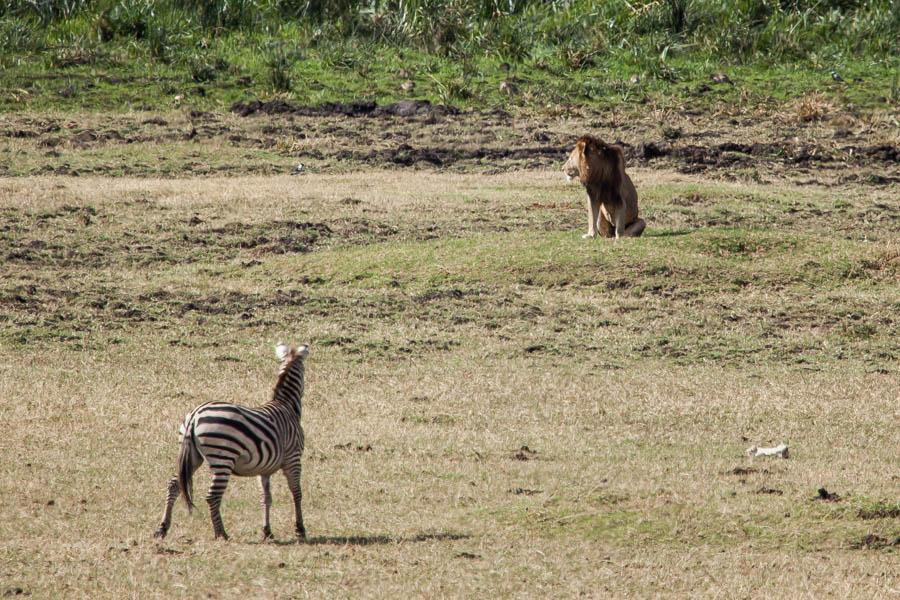 safarioct2013-25