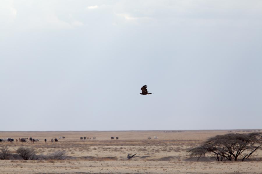 safarioct2013-30