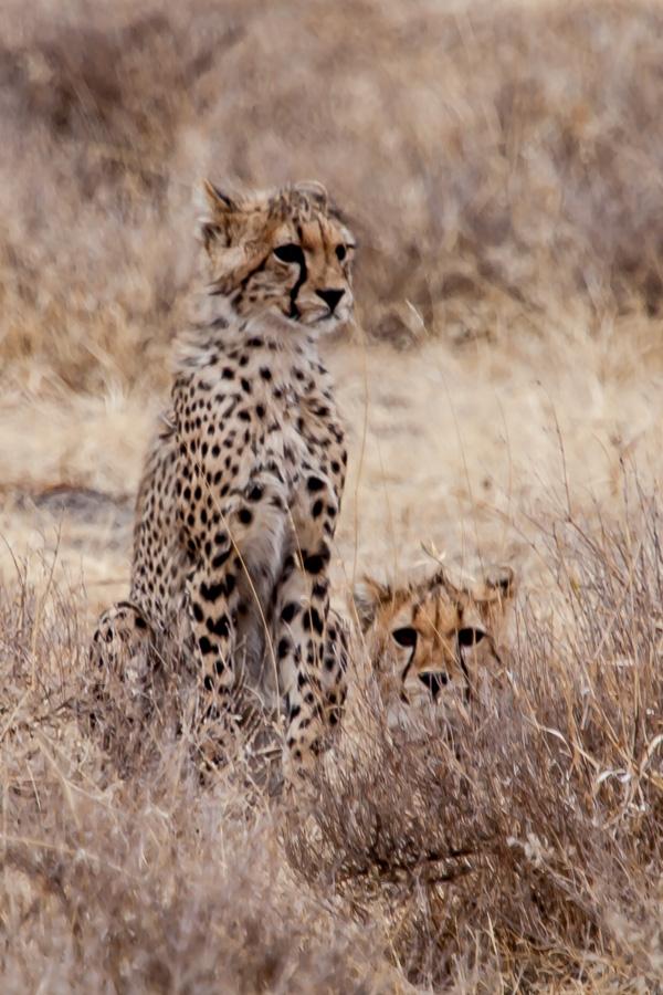 safarioct2013-31