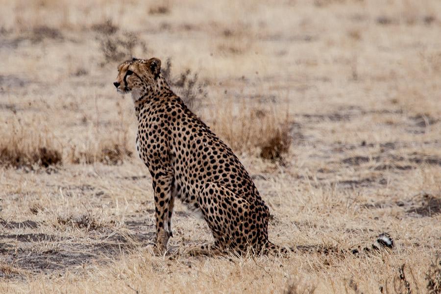 safarioct2013-32