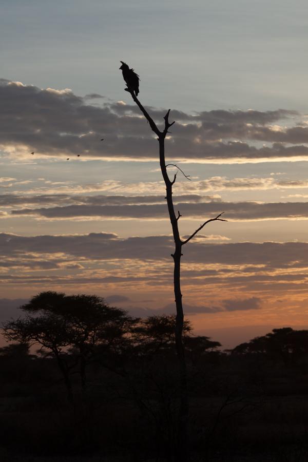 safarioct2013-33