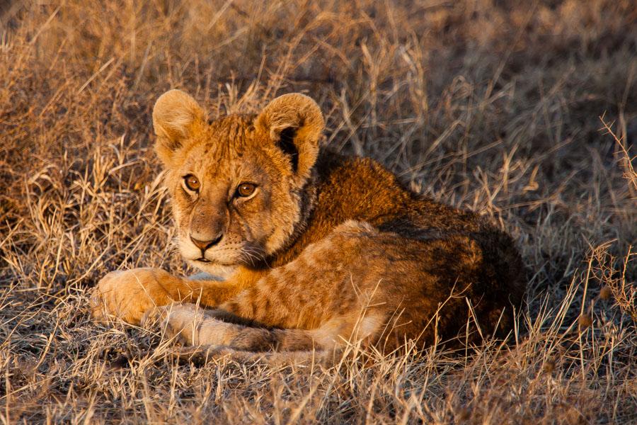 safarioct2013-34