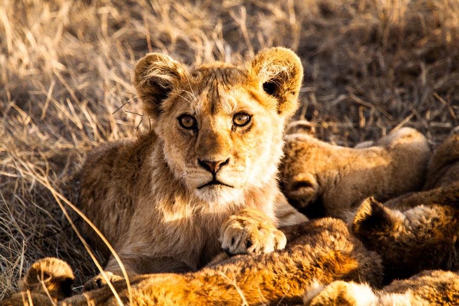 safarioct2013-37
