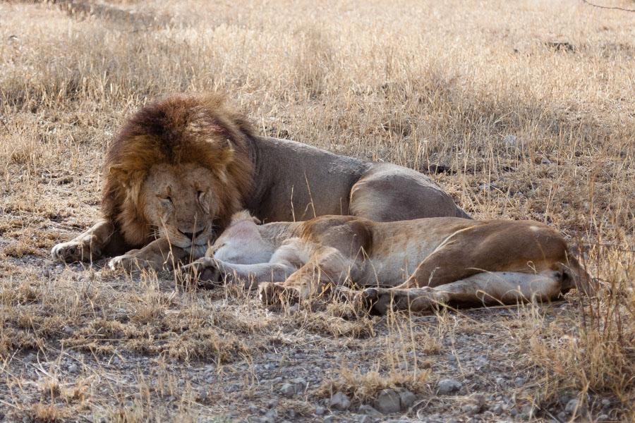 safarioct2013-45
