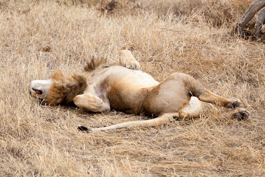 safarioct2013-46