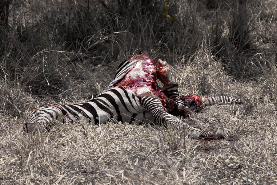 safarioct2013-5