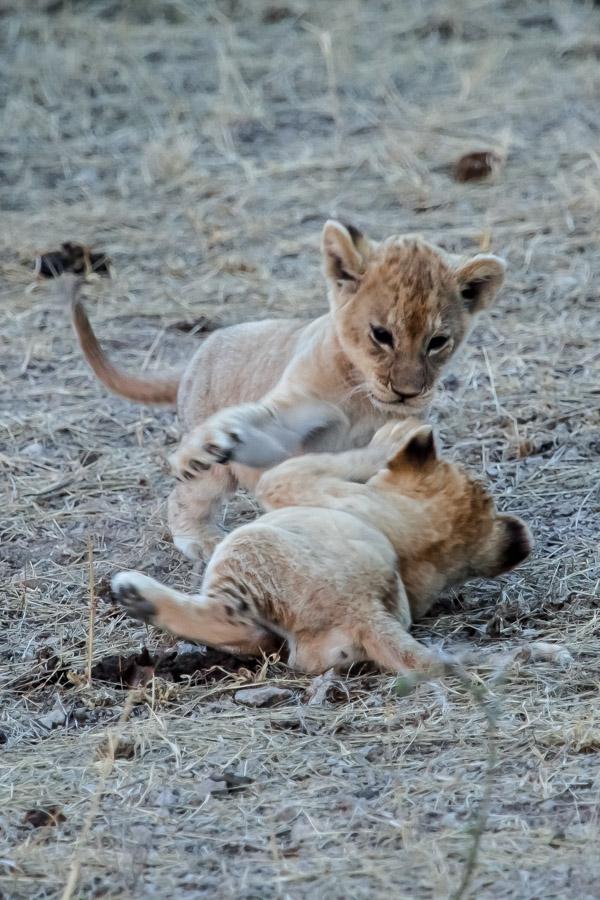 safarioct2013-50