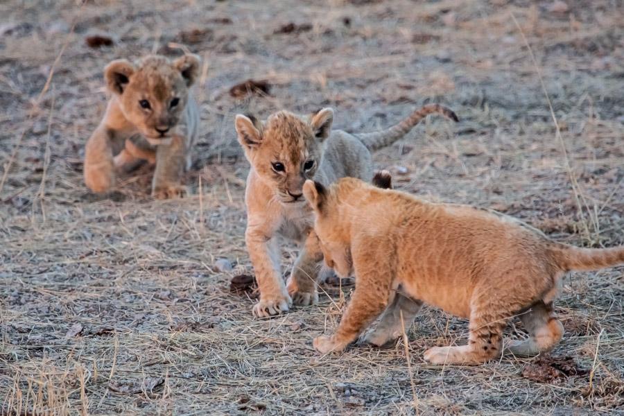 safarioct2013-51