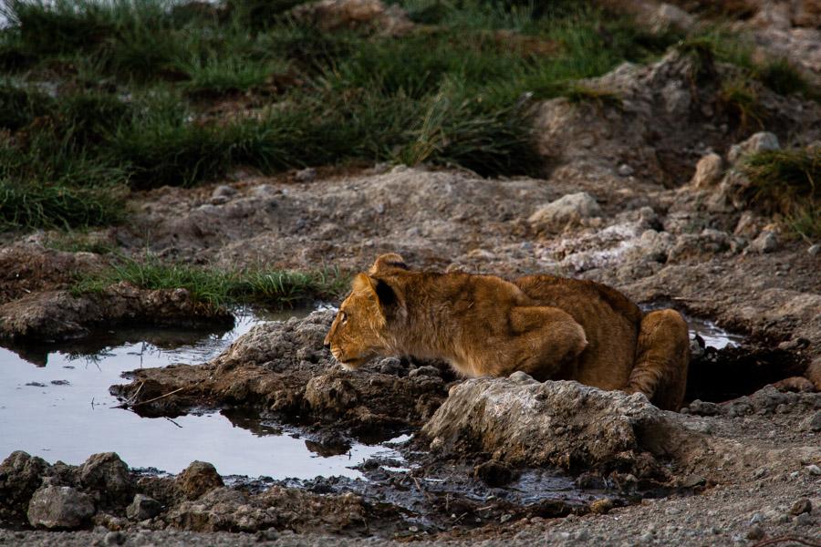 safarioct2013-53