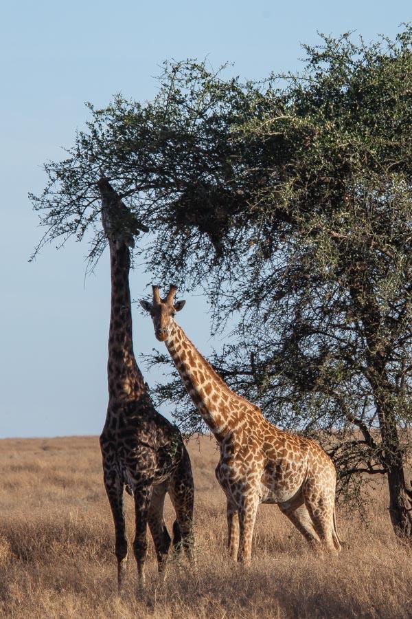 safarioct2013-57
