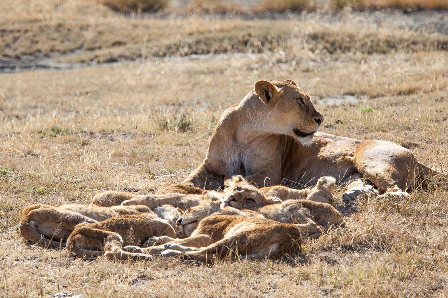 safarioct2013-58