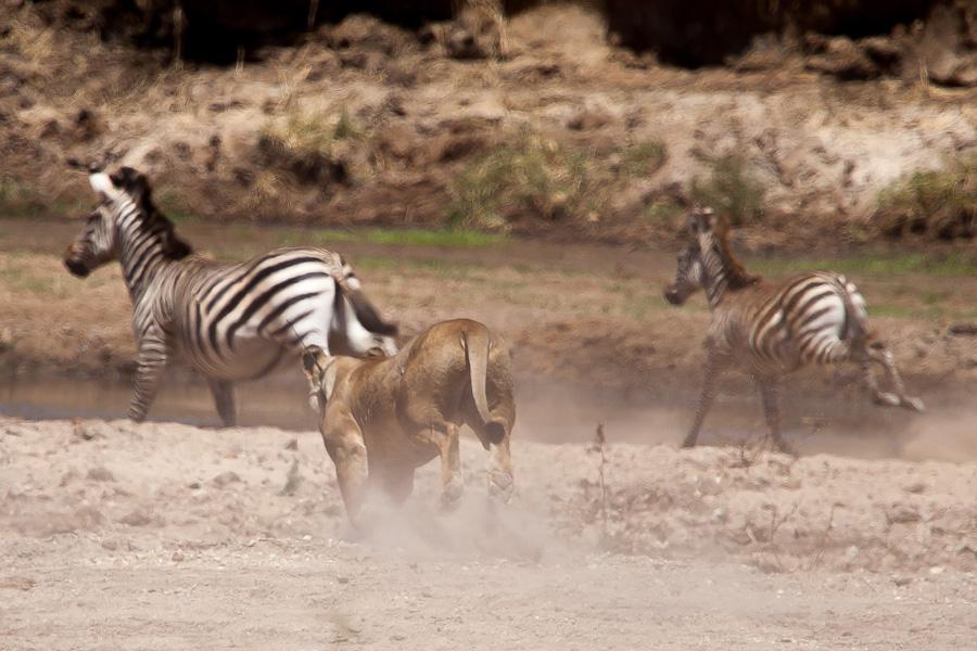 safarioct2013-71